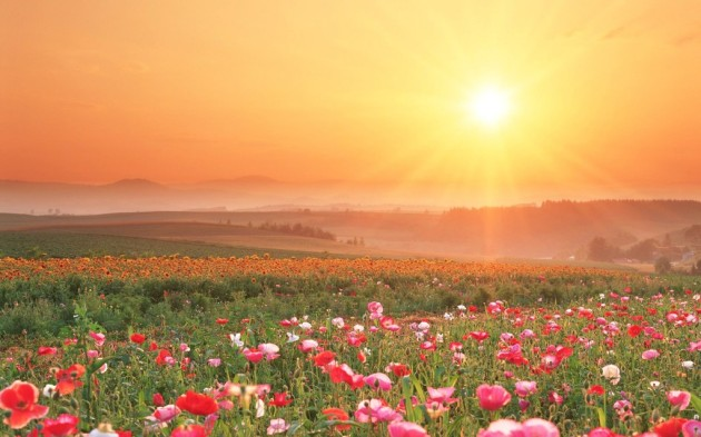 field-of-flowers-sunset-1024x640