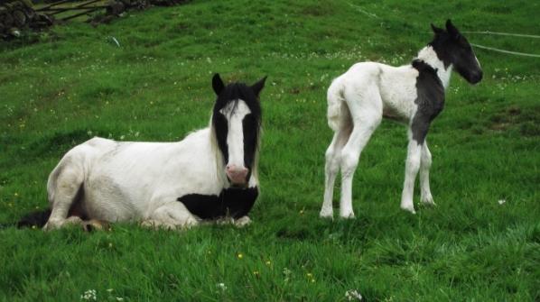 New Foal 1
